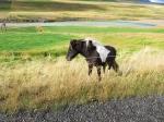 iceland_day2_highland_road_horse
